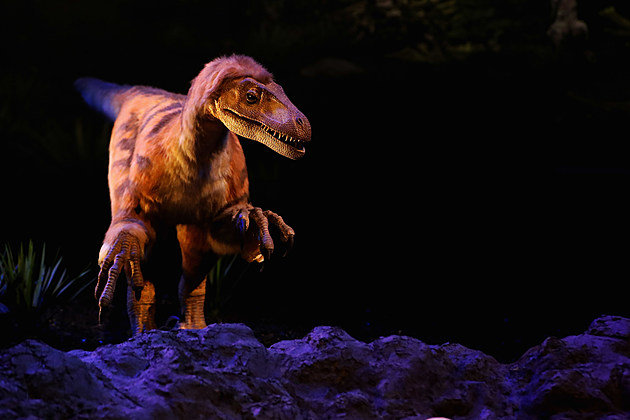T rex named Trix at Naturalis Museum of Leiden